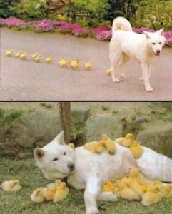 Ein Hundemama auf Abwegen