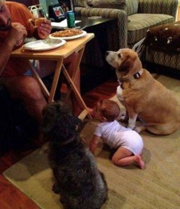 Hey woher kommt dieser komische neue Hund