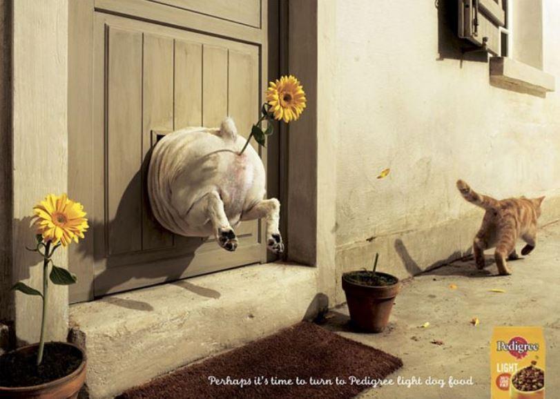 Auch Hunde brauchen eine Diaet nach den Festtagen